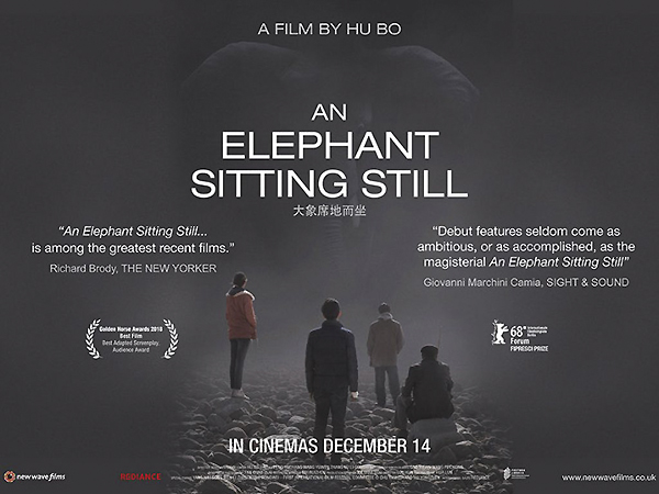 elephant-sitting-still